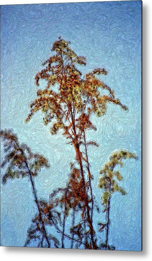 Weed Metal Print featuring the photograph In Praise Of Weeds II by Steve Harrington