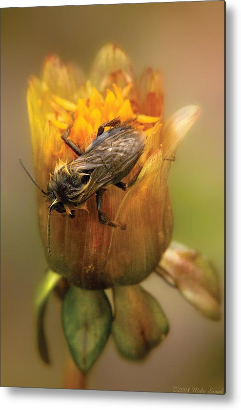 Savad Metal Print featuring the photograph Insect - Bee - Dare To Bee Different by Mike Savad