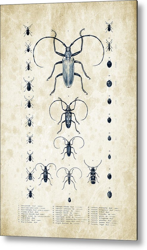 Beetle Metal Print featuring the digital art Insects - 1832 - 08 by Aged Pixel