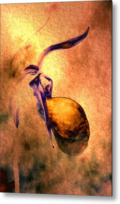 Metal Print featuring the photograph Lady Slipper by Roger Soule