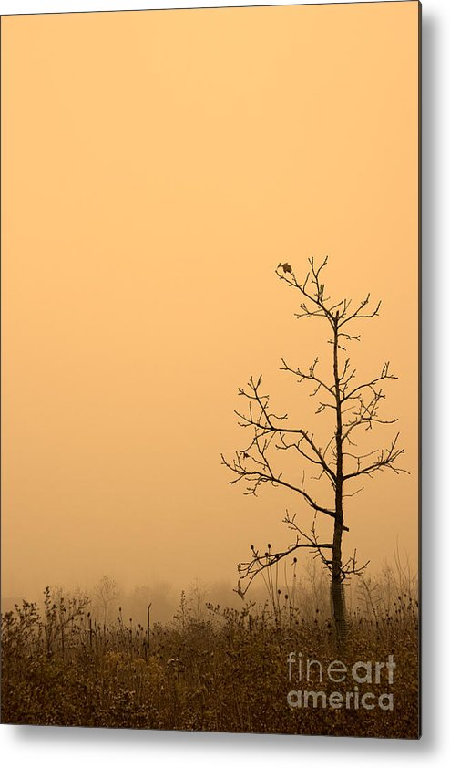 Tree Metal Print featuring the photograph Last Leaves by Timothy Johnson