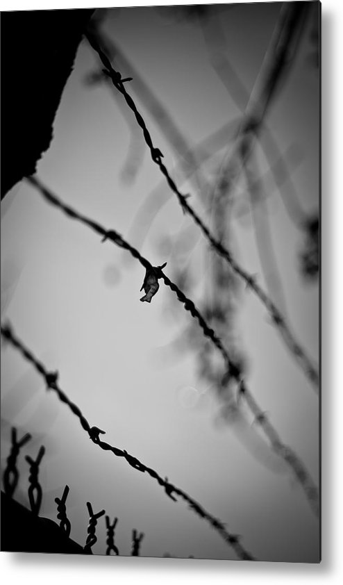 Black And White Photograph Metal Print featuring the photograph Let Me Out by Mike Oistad