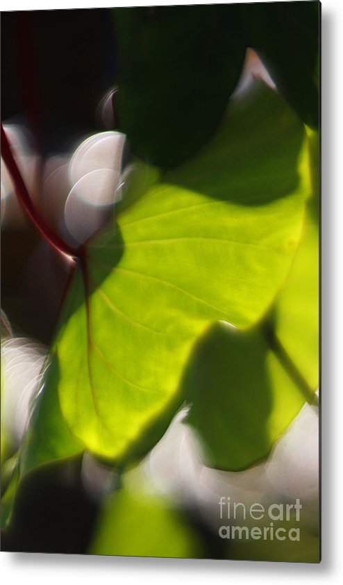 Green Metal Print featuring the photograph Light I by Katherine Morgan