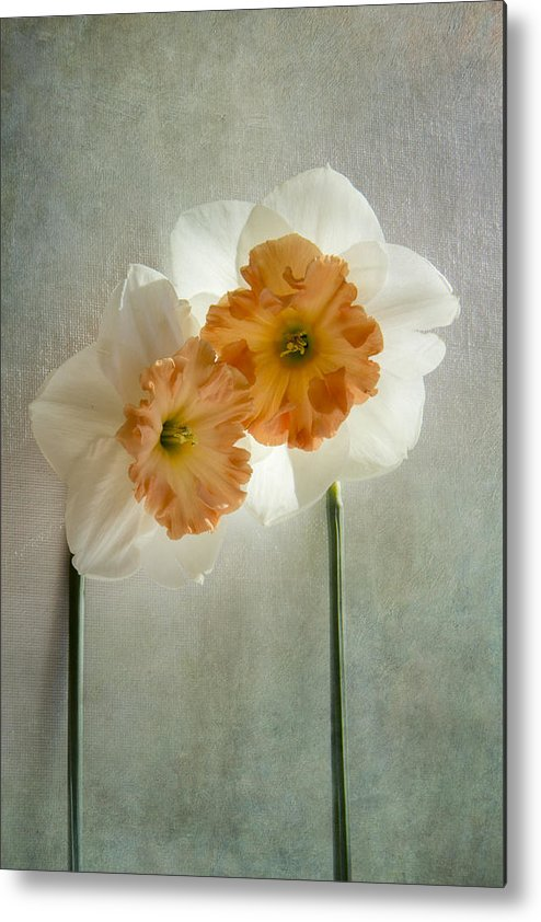 Daffodil Metal Print featuring the photograph Love In Bloom by Marina Kojukhova