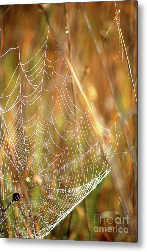Marsh Metal Print featuring the photograph Magic In The Marsh by Carol Groenen