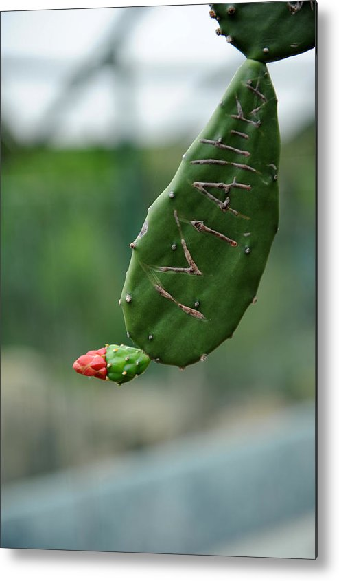 Cactus Metal Print featuring the photograph Mallika by Jessica Rose