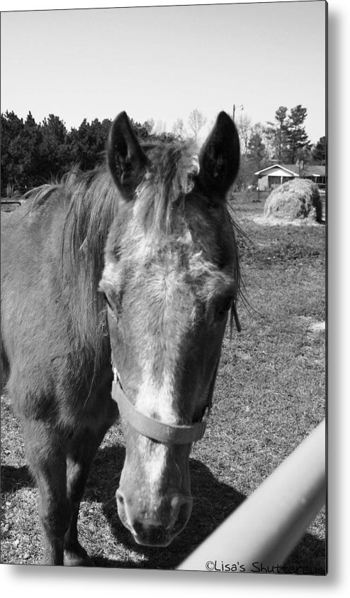 Horse Metal Print featuring the photograph Mcdonald 5 by Lisa Johnston