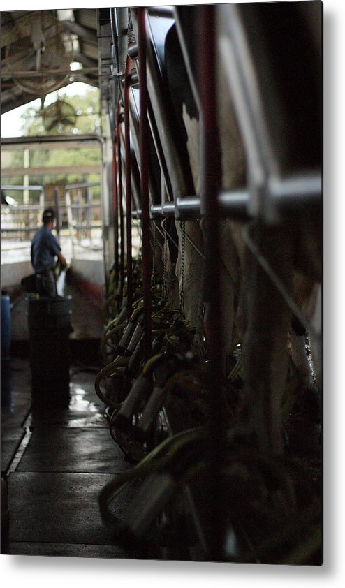 Cows Metal Print featuring the photograph Milk'n The Job by Jamie Smith