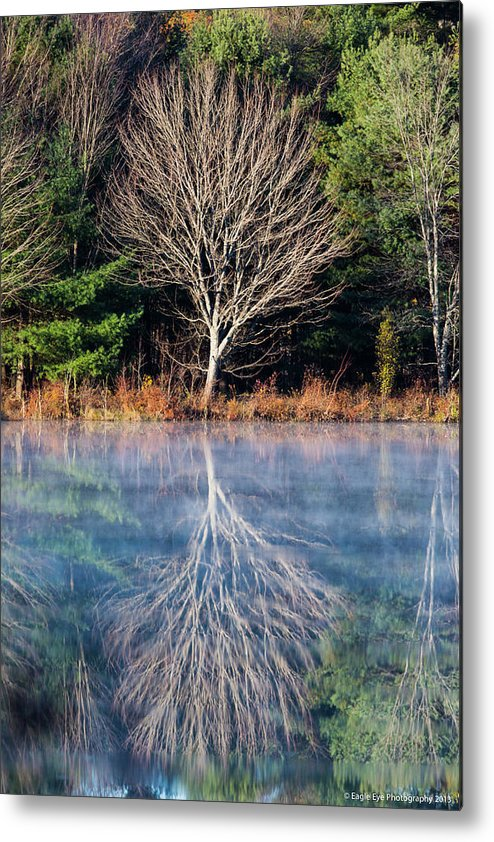 Landscape Metal Print featuring the photograph Mirror Mirror On The Pond by David Lipsy