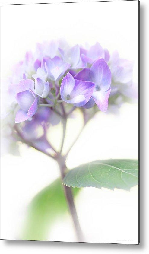Hydrangea Metal Print featuring the photograph Misty Hydrangea Flower by Jennie Marie Schell