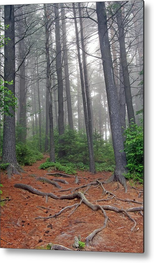 Ontario Metal Print featuring the photograph Misty Morning In An Algonquin Forest by Peter Pauer