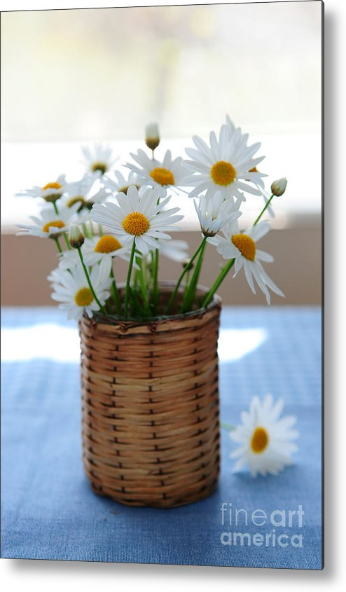 Daisy Metal Print featuring the photograph Morning Daisies by Elena Elisseeva