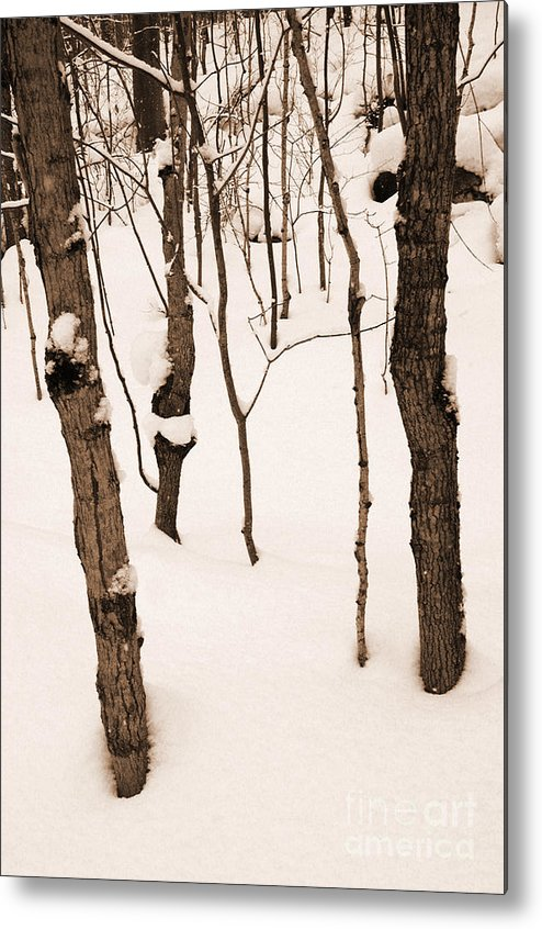 Landscape Metal Print featuring the photograph Muskoka Winter 3 by Kathi Shotwell