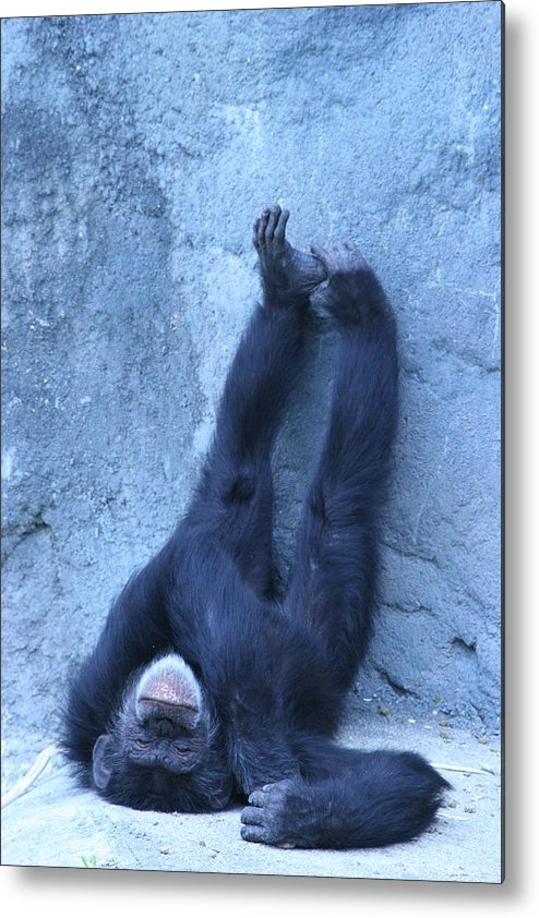 Monkey Metal Print featuring the photograph Nap Time by Linda Russell