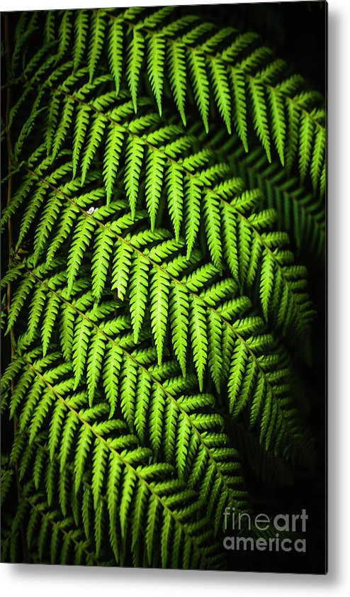 Green Metal Print featuring the photograph Night Forest Frond by Jorgo Photography - Wall Art Gallery