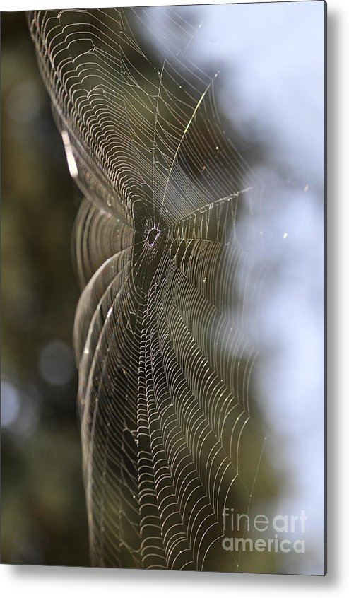 Clay Metal Print featuring the photograph Oh What Webs We Weave by Clayton Bruster
