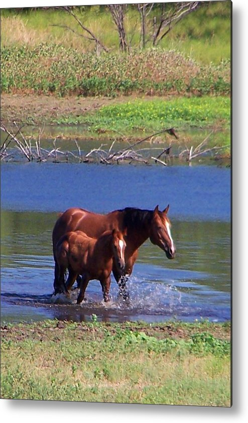 Horses Metal Print featuring the photograph Okay Time To Go. by Lilly King