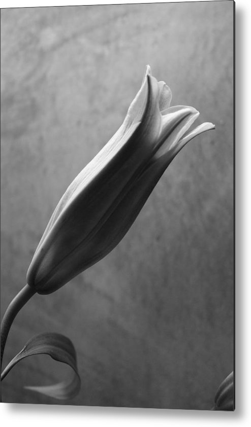 Stargazer Lily Metal Print featuring the photograph Opening by Susan Rice