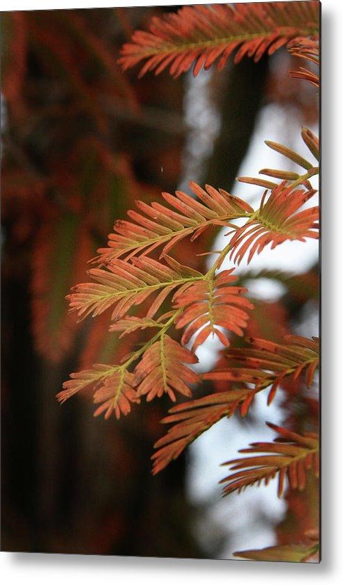 Fall Metal Print featuring the photograph Orange Tinted Glow by Amanda Wimsatt