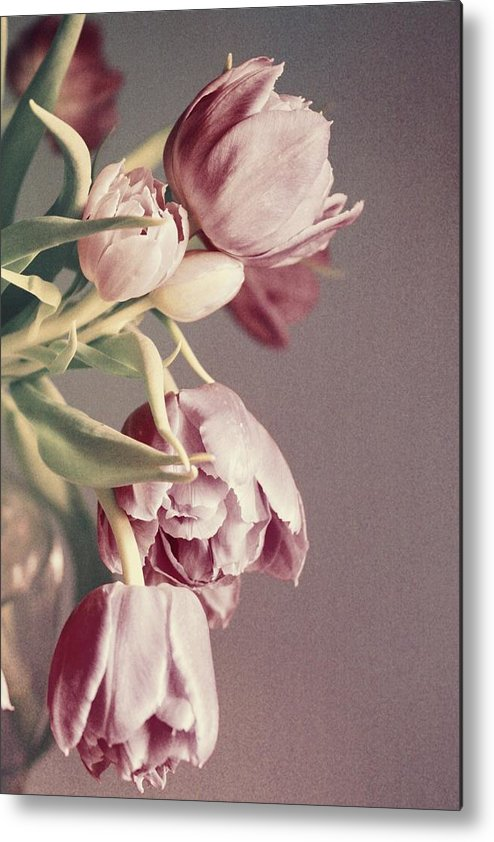 Tulips Metal Print featuring the photograph Pale Tulips by Cathie Tyler