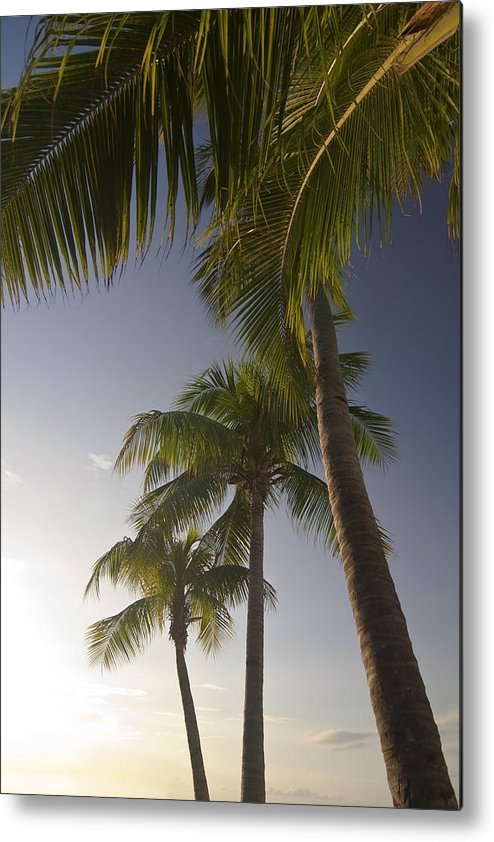 Palm Trees Metal Print featuring the photograph Palm Trees At Sunset by Sven Brogren