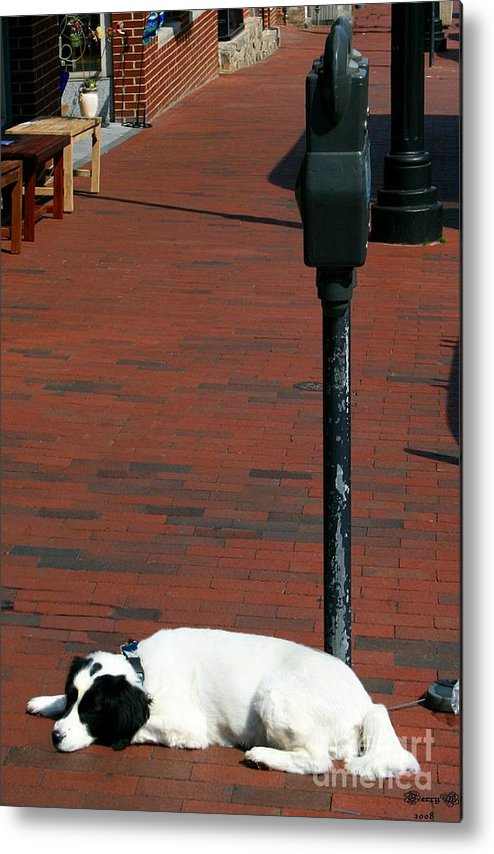 Dog Metal Print featuring the photograph Patience by Terry Burgess