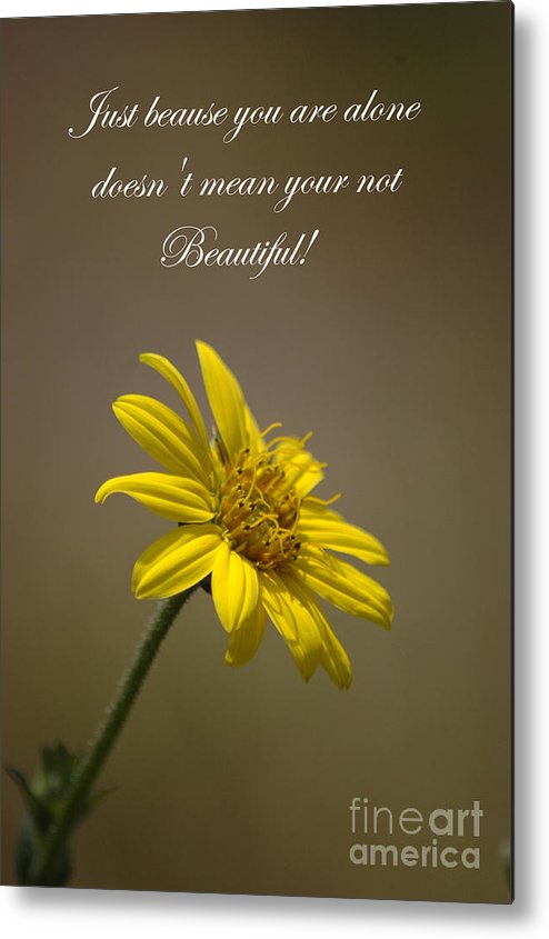 Greeting Cards Metal Print featuring the photograph Portrait Of A Wildflower 1 by Devane Mattoni