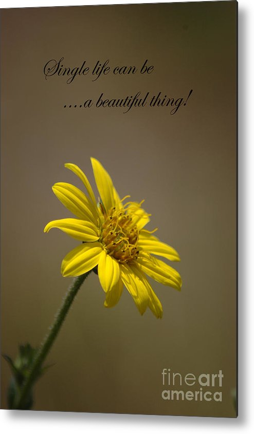 Greeting Cards Metal Print featuring the photograph Portrait Of A Wildflower 3 by Devane Mattoni
