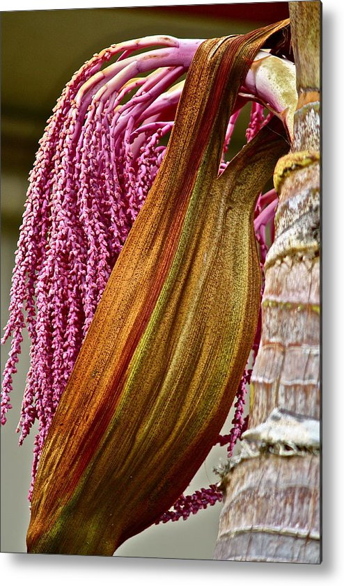 Tree Metal Print featuring the photograph Pretty In Pink by Diana Hatcher