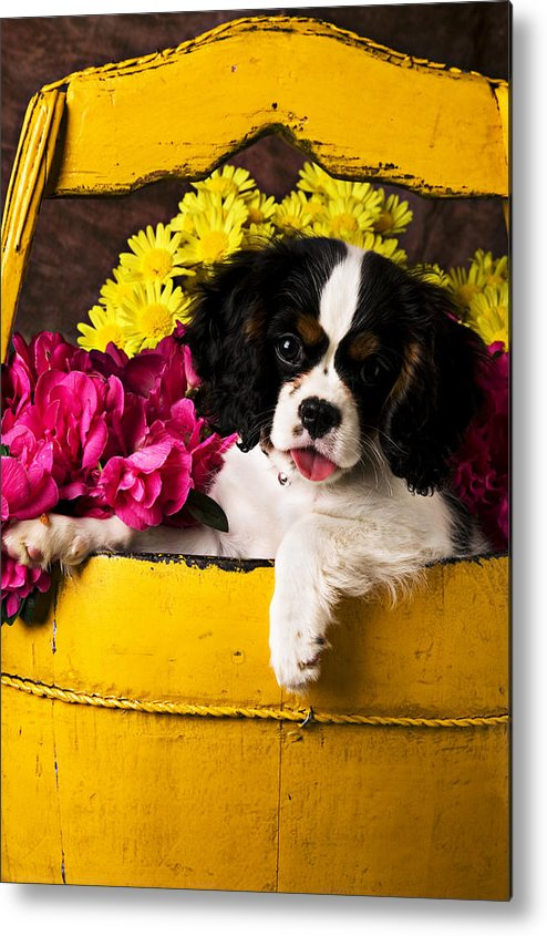 Puppy Dog Cute Doggy Domestic Pup Pet Pedigree Canine Creature Soccer Ball Metal Print featuring the photograph Puppy In Yellow Bucket by Garry Gay