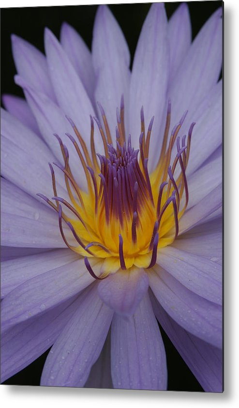 Purple Flower Metal Print featuring the photograph Purple Flower by Linda Russell