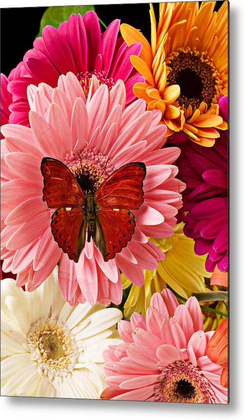 Butterfly Daisy Wings Flower Flowers Petal Petals Floral Metal Print featuring the photograph Red Butterfly On Bunch Of Flowers by Garry Gay