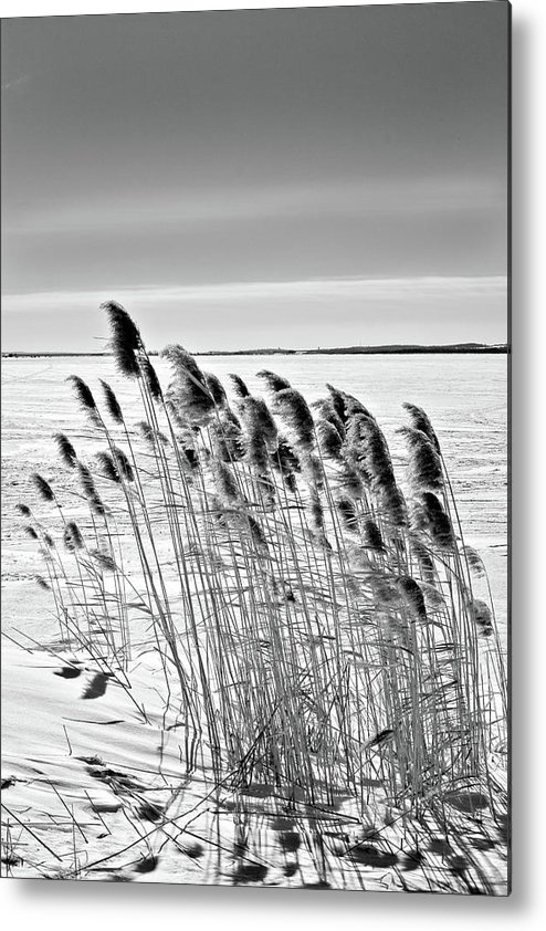 Black And White Metal Print featuring the photograph Reeds On A Frozen Lake by Peter Pauer
