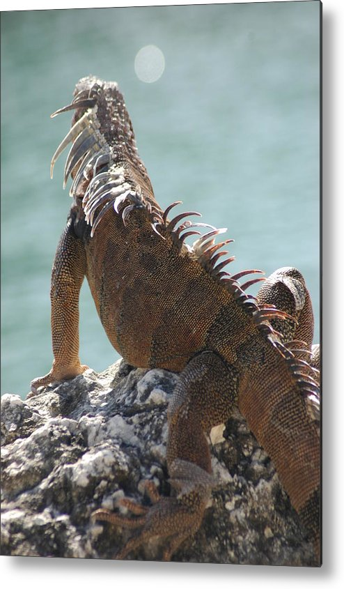 Animals Metal Print featuring the photograph Reflections by Lori Mellen-Pagliaro