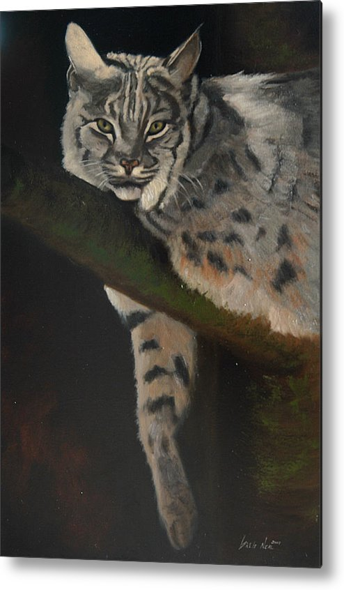 Bobcat Metal Print featuring the painting Resting Up High by Greg Neal