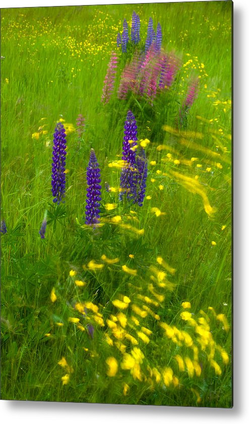 Wild Flowers Metal Print featuring the photograph Restless by Irwin Barrett