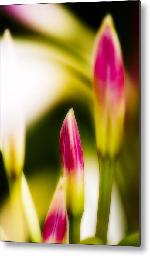 Flower Metal Print featuring the digital art Rhododendron Buds by Ches Black