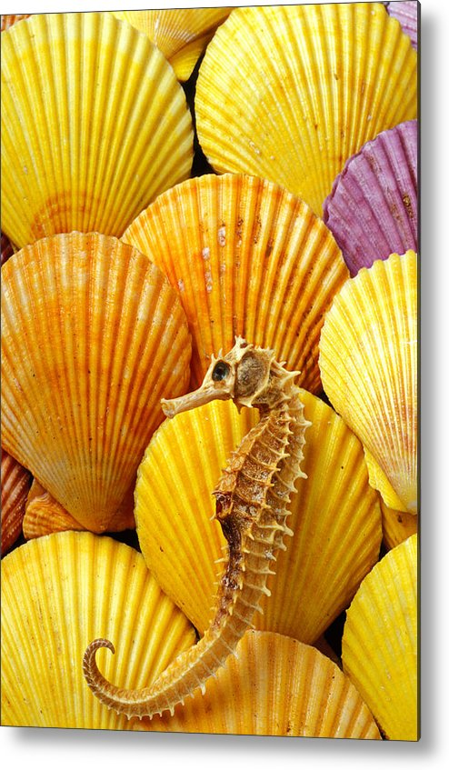 Seahorse Metal Print featuring the photograph Sea Horse And Sea Shells by Garry Gay