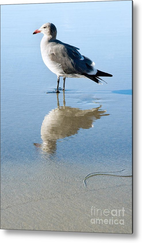 United States Meditation Serene Serenity Contemplating Contemplation Peaceful Sand Reflection Southern California La Jolla Beach Seagull Bird Fauna Animal Nature Calm America American Tranquil Summer Summertime San Diego Reflected Beautiful Gull Seabird Profile Standing Side Laridae Sunny Quiet Metal Print featuring the photograph Seagull At La Jolla Shores Beach California by Julia Hiebaum