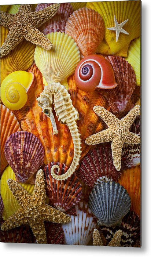 Seahorses Metal Print featuring the photograph Seahorse And Assorted Sea Shells by Garry Gay