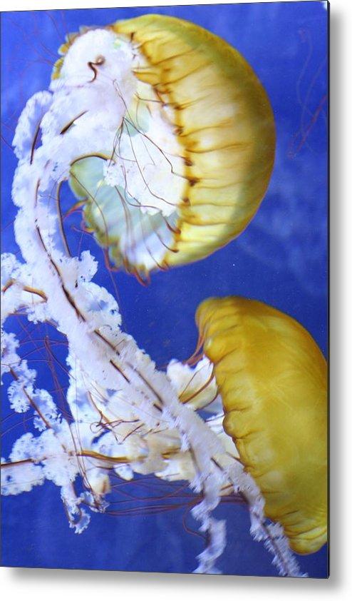 Jellyfish Metal Print featuring the photograph Serenity II by Melanie Beasley
