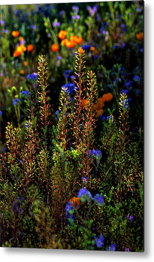 Flowers Metal Print featuring the photograph Shimmers by Randy Oberg