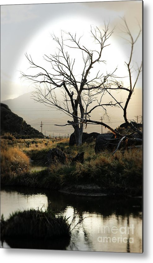 Desert Metal Print featuring the photograph Silent Lucidity by Lori Mellen-Pagliaro