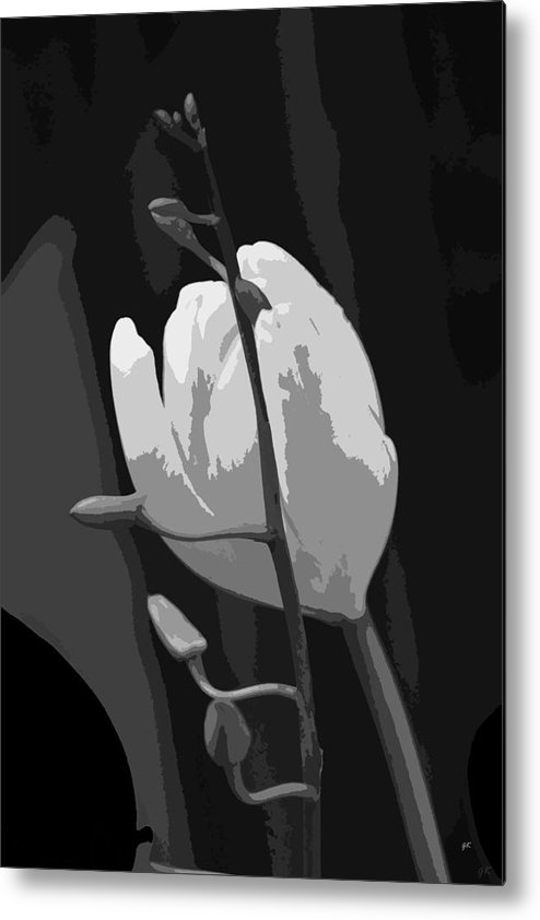 Abstract Digital Art Metal Print featuring the photograph Simplicity by Gerlinde Keating - Galleria GK Keating Associates Inc