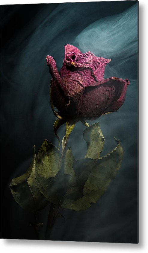 Rose Metal Print featuring the photograph Spirit Of A Dying Rose by Vincent Knaus