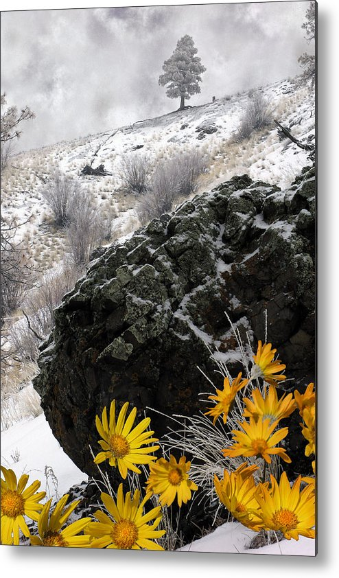 Nature Metal Print featuring the photograph Spring Fantasy by Ed Hall
