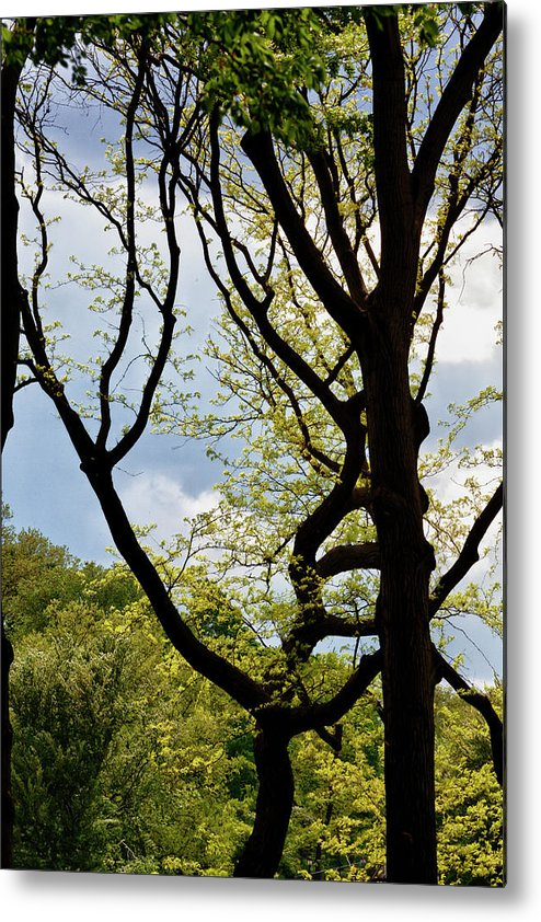 Spring Trees Metal Print featuring the photograph Spring Trees And Clouds by Robert Ullmann