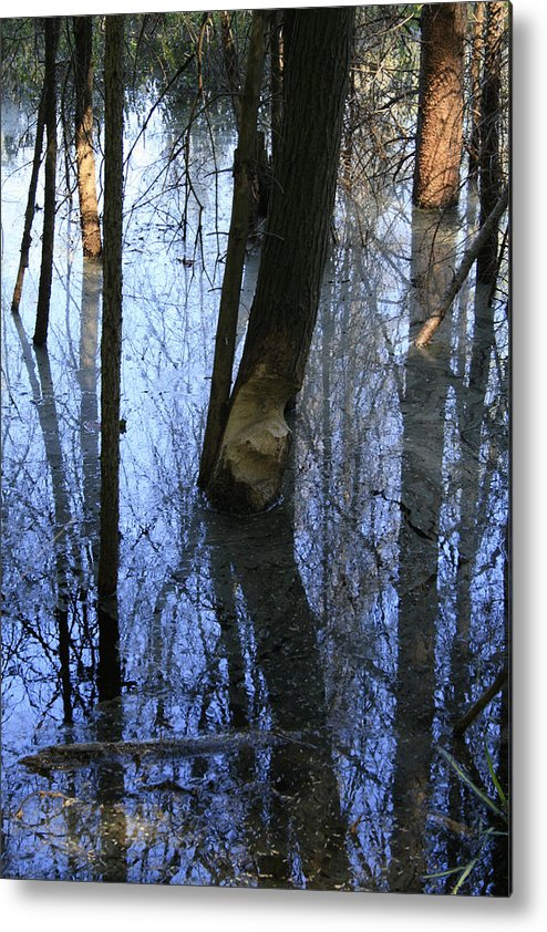 Bog Metal Print featuring the photograph Still by Alan Rutherford