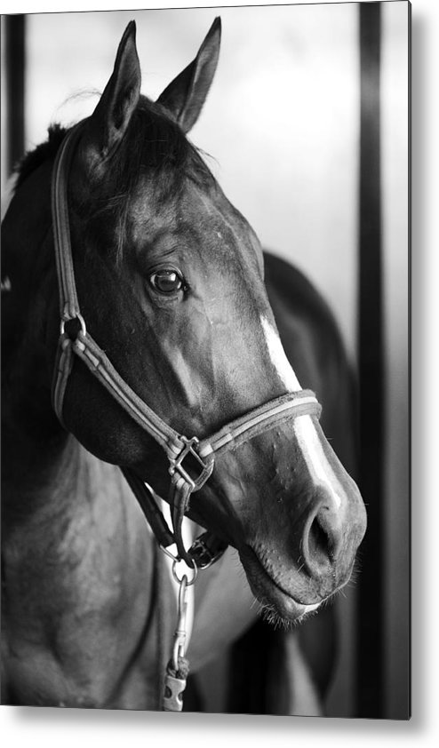 Horse Metal Print featuring the photograph Horse And Stillness by Marilyn Hunt