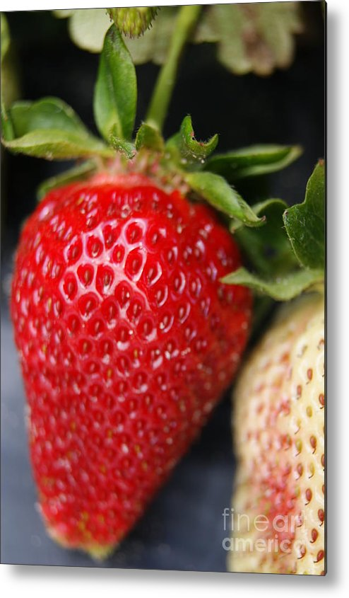 Fruit Metal Print featuring the photograph Strawberry by Tina McKay-Brown